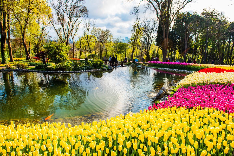 tulipesflore